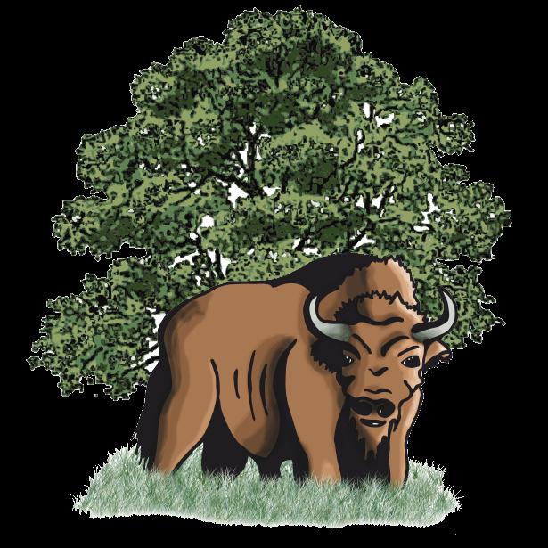 Bisons Suchy